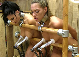 Milking of two slaves with the real cow milking device